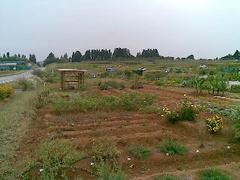 開ケ丘の市民農園